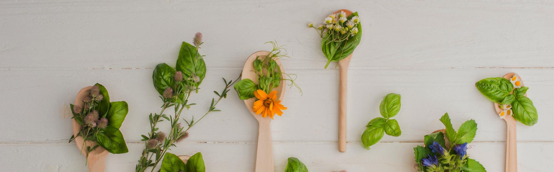 növények asztalon